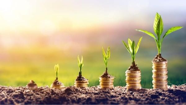 NATJEČAJ: 4.1.1 Restrukturiranje, modernizacija i povećanje konkurentnosti poljoprivrednih gospodarstava – ulaganja u proizvodnju povrća u zaštićenom prostoru – plasteniku