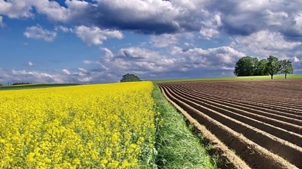 Mjera 21 - Izvanredna privremena potpora poljoprivrednicima i MSP-ovima koji su posebno pogođeni krizom uzrokovanom bolešću COVID-19